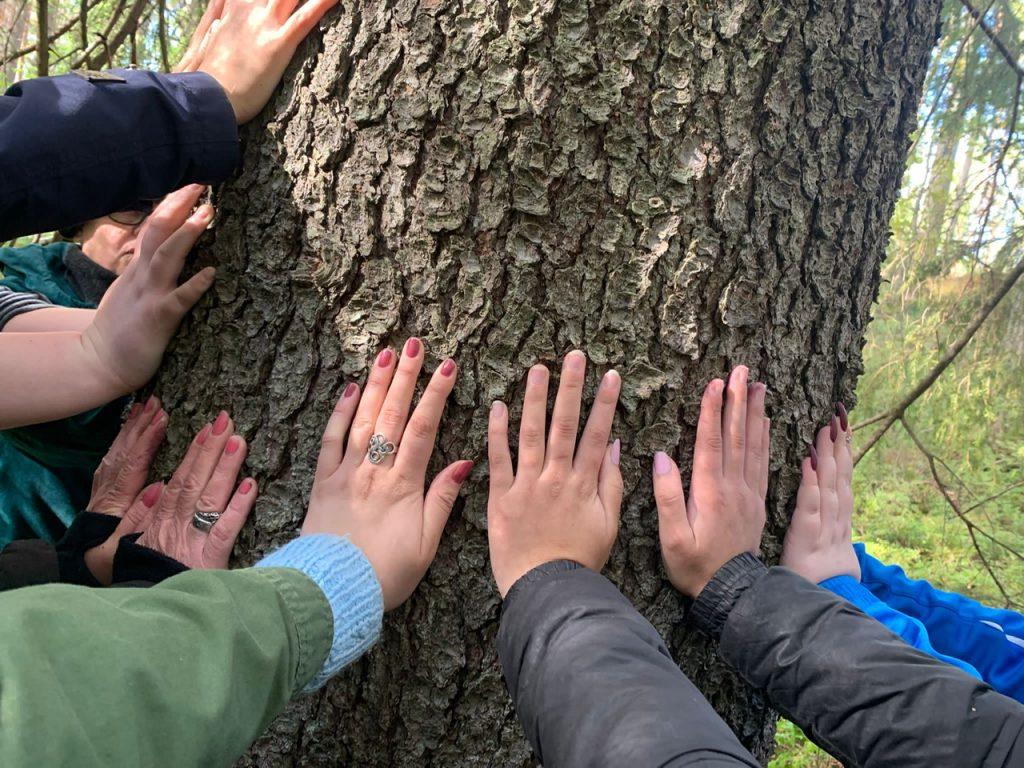Kädet koskettavat puunrunkoa.